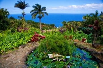 The Garden of Eden Maui