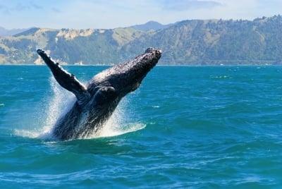 Molokai ist toll um Wale zu beobachten